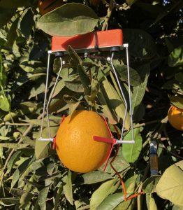 Fruit Dendrometer